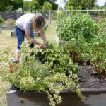 Seed Money: Austin residents launch community garden with help from Texas Grants Resource Center